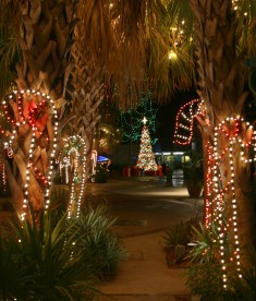 The Zoo's sub-tropical flora provides an exotic backdrop for holiday lights.